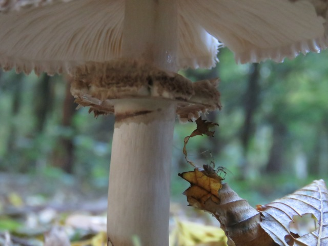 Spider and fungi