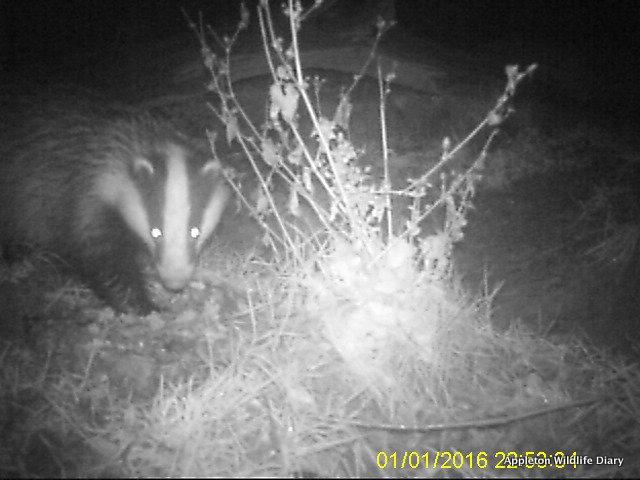2016 badger 1