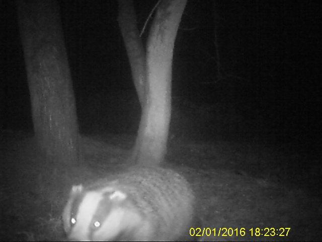 2016 badger 3