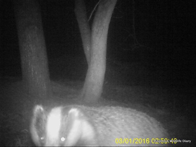 2016 badger 2