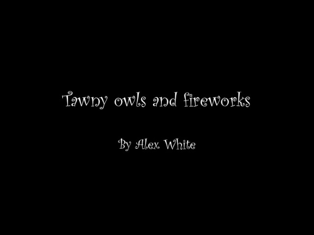 Tanwy owls and fireworks by Alex White