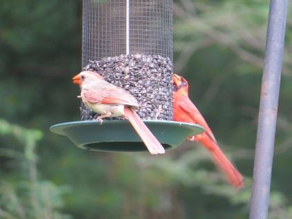Birds USA