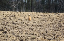 February hare 2