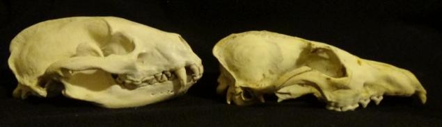 skull 9