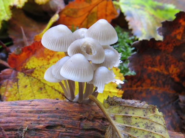 Autumnal fungi Alex White -