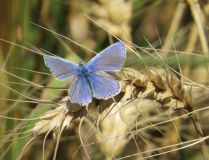 Peoples choice and winner of GWT photography competition aged 8-11 2014