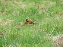 Hiding in the grass