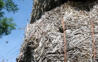 Bees nest
