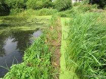 Floating wetland