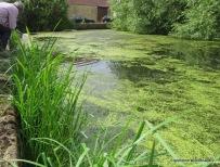 Cumnor pond
