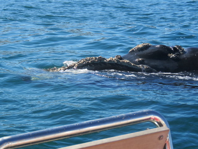 Whale came and nudged the boat