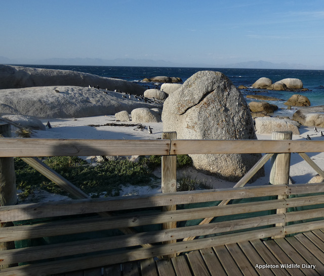 Wooden walkway on Boulders Beach