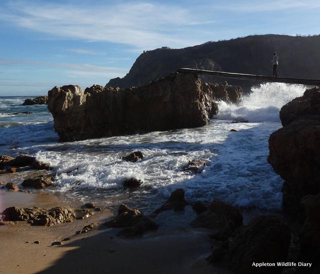 Coney Glen Beach watching Humpback whale