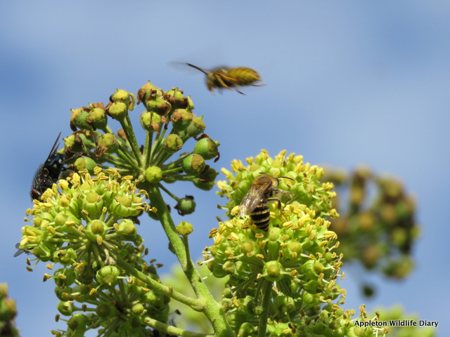 Incoming wasp