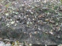 Footprints on the bank of the stream