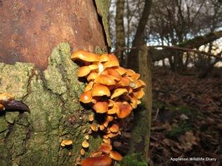 Fungi and slug