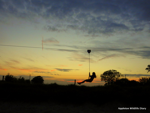 Zip wire at twilight