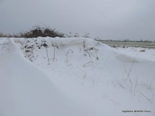 Snow drift 2