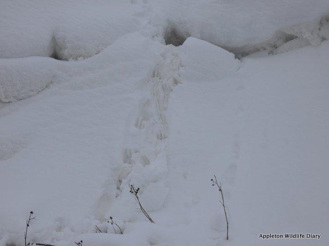 Rabbit burrow in the snow