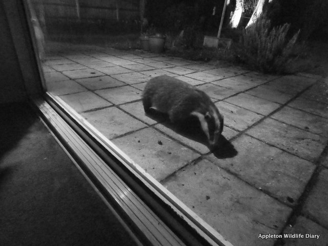 patio window badger