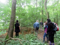 Looking at badger sett