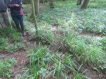 Badger paths