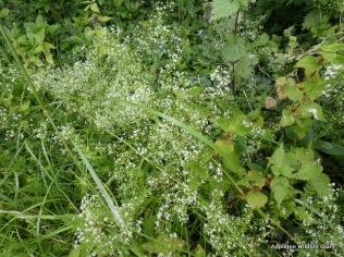 Grass verge