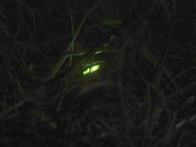 Glow worm 2