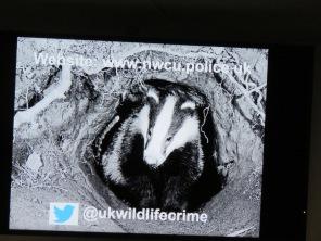 wildlifecrime slide