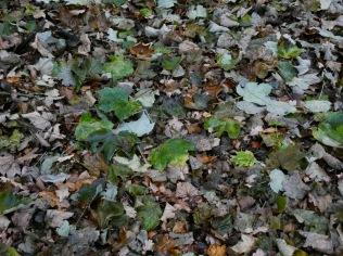 Woodland floor 2