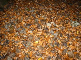 woodland floor with flash