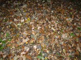 woodland floor colours