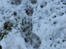 Second Badger footprint