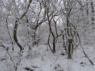 Narnia looking wood