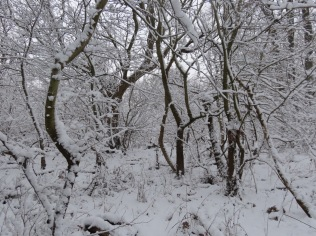 Narnia looking wood