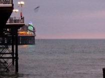 Starlings at Brighton