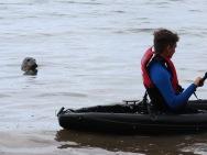 Being followed be a seal in Devon