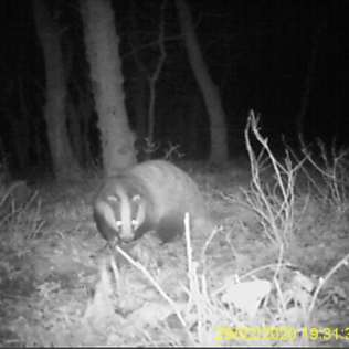 Badger no 1 face
