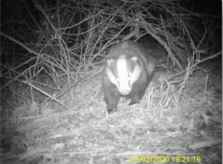 Badger no 2 face